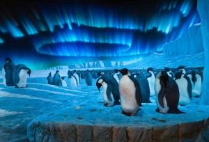 Emperor penguin diorama