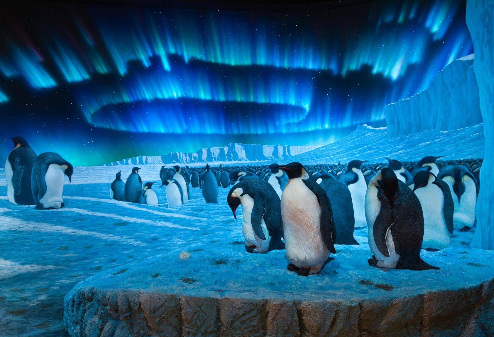 Wallpapers Tagged With Penguins Harbor Emperor Sea Weddell Safe